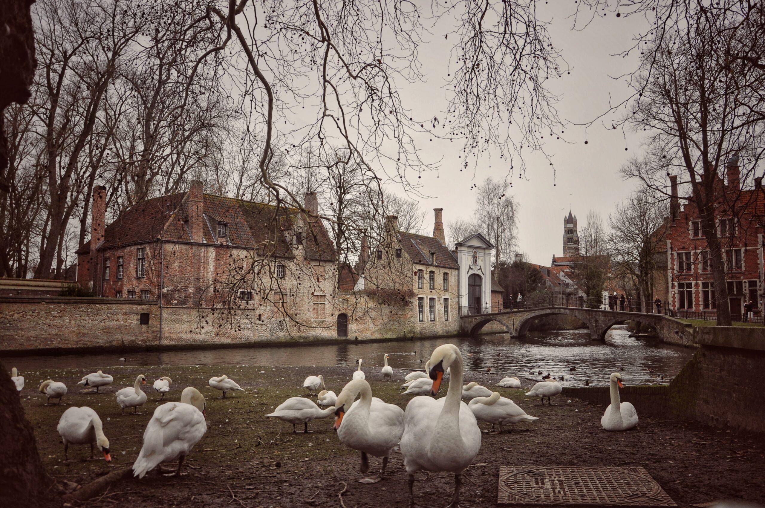 Lago dell'amore Bruges